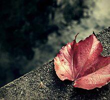 Autumn leaf on the bridge by were