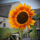 SUNFLOWER & Bee by AnnDixon