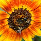 TWO Bee's One Sunflower by AnnDixon