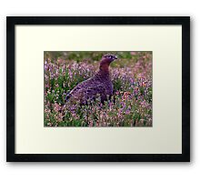 Grouse #3 Framed Print