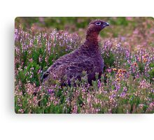 Grouse #3 Canvas Print
