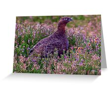 Grouse #3 Greeting Card