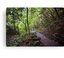 The Path Leads Back To You Canvas Print