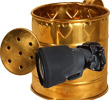 The Golden Watering Can by Gerard Rotse