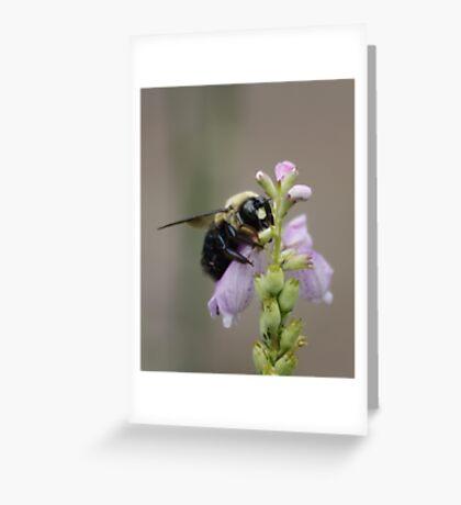 BIG BEE !!! Greeting Card