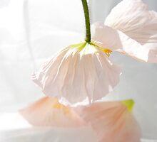 Dance of the Poppy-petal fairy. by Fineli