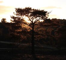 The last rays of sun - Walking out of Frensham woods - 5/8 by pathseeker