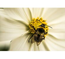A Bee for effort Photographic Print