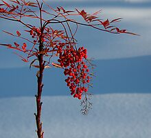 Red on White by mojo1160