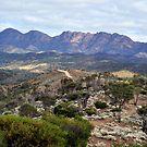 Flinders Greenery 2010 by Bryan Cossart