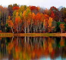 Brilliant Autumn Colors On The Lake by Gene Walls