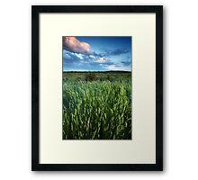 Blakeney Grass Framed Print