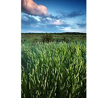 Blakeney Grass Photographic Print