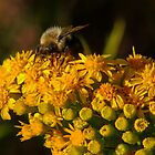Bee on Yellow by AnnDixon