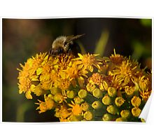 Bee on Yellow Poster