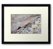 Hiding Water Dragon. Framed Print