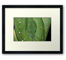 Green Tree Python. Framed Print
