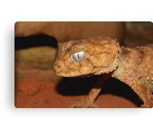 Centralian Prickly Knob-tailed Gecko. Canvas Print