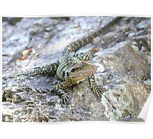 Water Dragon. Poster