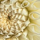 Antique Silk Dahlia by Marilyn Cornwell