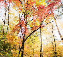 Trees in Autumn by Parker Cunningham