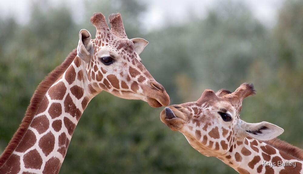 Pucker Up! (Giraffes) by Krys Bailey