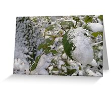 Nettles in a Winter Wonderland Greeting Card