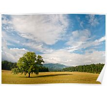 Summer Tree-Cades Cove, GSMNP Poster
