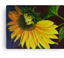 """""""Sunflower, Turning"""" Oil on Canvas Canvas Print"""