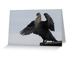 Pelagic Cormorant Greeting Card