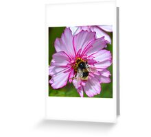 Bumble Bee on Cosmos Flower Greeting Card