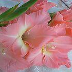 Gladiolus by Ana Belaj