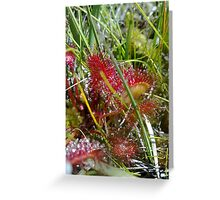 Sundew Plant Greeting Card