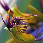 Wasp on Flax Plant-Abbotsbury Dorset UK by lynn carter