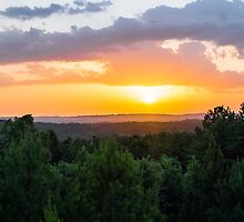 Pines at Sunset by Parker Cunningham