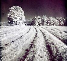 Tracks to Forest by Ethem Kelleci
