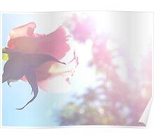 rosy resonance Poster
