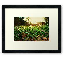 Grass Realm Framed Print