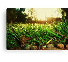 Grass Realm Canvas Print