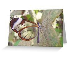 Glasswing Butterfly. Greeting Card