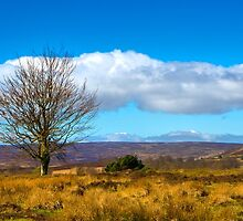 Moorland tree by Dave Hare