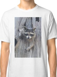 Raccoon Stuck in a Tree Classic T-Shirt