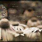Butterfly Profile by JulieLegg