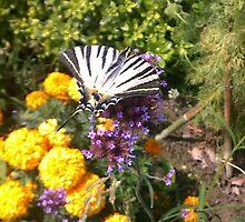 Butterfly on Flowers by Pontvert