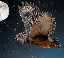 Eagle owl and the stars by Darren Bailey LRPS