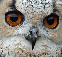 eagle owl eyes by purpleminx