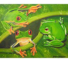 Three Frogs Interrupted Photographic Print