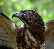 Broad Wings by soyrwoo