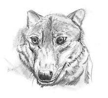 Proud silver wolf by KiraKiraSoul