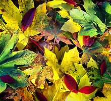 Fall Leaves by James Brotherton